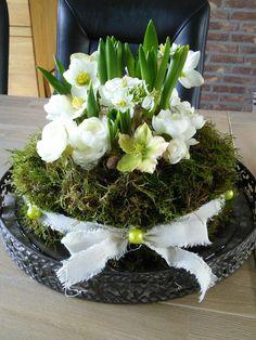 Bekijk de foto van Lily Debie met als titel Oase in taartvorm en met mos bekleed. In het midden o.a. bolletjes hyacinten en blauwe druifjes vastgezet met prikkertje.  Helleboris en nepranonkels. Lint er omheen en klaar is de voorjaarstaart.  en andere inspirerende plaatjes op Welke.nl.