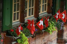 Window box in Bern
