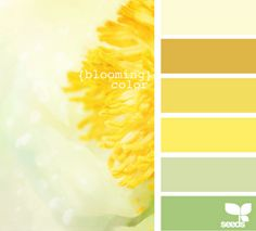 Color Inspiration. This is very soothing.