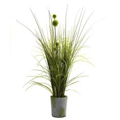 Enliven your home decor with the fresh look of this beautiful grass and dandelion arrangement. Springy, lively dandelions are complemented by a lush, green grass for a refreshing ensemble, arranged in a rustic-style cement planter.