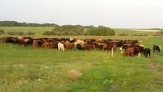Runoff reduced, water retention increased by multi-paddock grazing