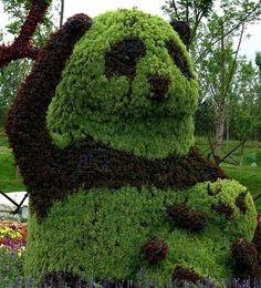 Panda Topiary in China
