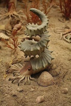 on Helioceras Heteromorph Ammonite, the most interesting extinct cephalopod specimen!Helioceras Heteromorph Ammonite, the most interesting extinct cephalopod specimen! Underwater Creatures, Underwater Life, Underwater Animals, Beautiful Creatures, Animals Beautiful, Cool Sea Creatures, Strange Creatures, Strange Animals, Rare Animals