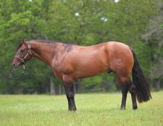 Brian Bell has an absolutely wonderful 3 year old stallion for the futurities this year in Footwork Revolution. Horses And Dogs, Show Horses, Rare Horses, All The Pretty Horses, Beautiful Horses, American Quarter Horse, Quarter Horses, Einstein, Dun Horse