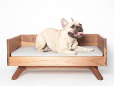 Joey High Back Pet Bed by Pup & Kit | Carriers, Beds & Houses | AHAlife.com
