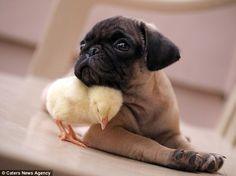 Os dois adoram se aconchegar. (Foto: Reprodução / Daily Mail UK)