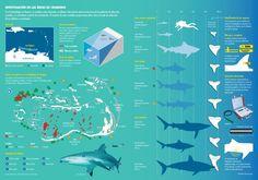 En el archipiélago de Los Roques los estudios están enfocados en obtener información sobre la estructura de la población de tiburones juveniles, s