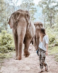 """- Chiang Mai, Thailand - """"The Elephant Sanctuary in Chiang Mai is an ecotourism park and wildlife sanctuary dedicated to the survival and development of Thai elephants. Chiang Mai, Bangkok, Places To Travel, Travel Destinations, Places To Visit, Krabi, Phuket, Thailand Travel, Asia Travel"""