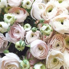 A closer look at some of our Spring favourites on this great wet Monday Hanoi ranunculus