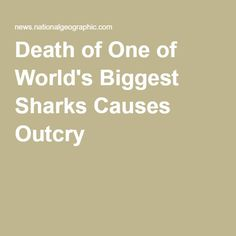 Death of One of World's Biggest Sharks Causes Outcry