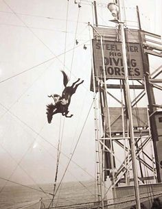 The diving horses performed at Atlantic City's Steel Pier in the 1920s and 1930s. The horse would jump into a tank of water, typically with a young woman riding on its back. - amazing! Crazy!