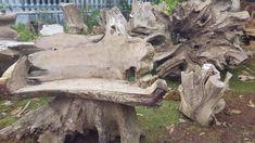 Natural teak root