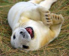 Happy Seal, posted via terriblycute.com