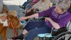 Miniature horses visited residents at Northwood Retirement Community in Jasper, Indiana. #GoodSamaritanSociety