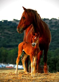 Mama Horse & Beautiful Baby