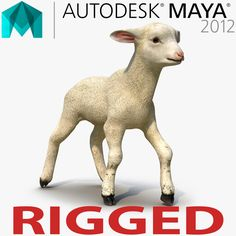Lamb Rigged for Maya