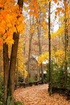 Landscape Photography Tips: Cabin in the woods with autumn