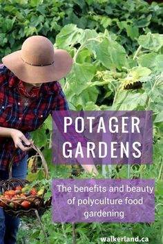 A potager vegetable garden mixes function with beauty, to create a pleasant and joyful surrounding within your food landscape. Learn some fun ways to transform your own vegetable garden.