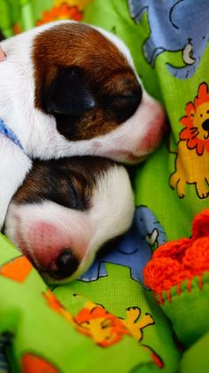 Our Little JRT