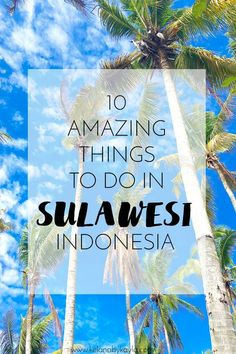 Sulawesi really is a hidden gem of cultural bliss. Here is a wrap of some of my favourite things to do in Sulawesi featuring Manado and Bunaken Island