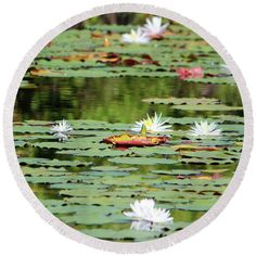 Waterlily Round Beach Towel featuring the photograph Waterlilies In The Morning by Cynthia Guinn