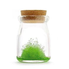 grow your own crystals - so many cool ways to grow crystals: borax, epsom salt, table salt, sugar. would be fun to do them all and compare.