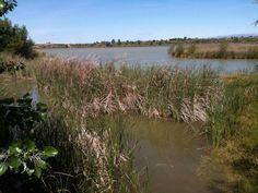 La  recuperación del Estany de Ivars i Vila-Sana ha convertido el humedal en un interesante microespacio #rednatura