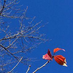 """【norippesan81】さんのInstagramをピンしています。 《葉っぱのささやき """"僕たちだけになっちゃったね""""  #落葉 #桜 #葉っぱ #葉 #紅葉 #植物 #木 #樹木 #街路樹  #plant #plants #tree #trees #leaf #leaves》"""