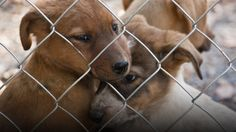 Crimes against animals are being reclassified for the FBI is taking things seriously Animal Rescue, Your Pet, Sick, Labrador Retriever, Crime, Pets, Parenting, Animals, People