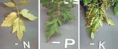 Identifying nutrient deficiency in plants