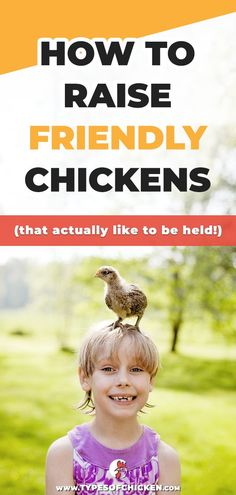 Free tutorial on How To Raise FRIENDLY Chickens, our suggestions and tips on raising chickens! Types Of Chickens, Raising Backyard Chickens, Keeping Chickens, Pet Chickens, Urban Chickens, How To Raise Chickens, Silkie Chickens, Building A Chicken Coop, Diy Chicken Coop
