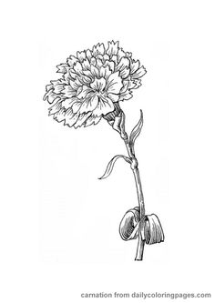 Super design flower drawing coloring pages 33 ideas Carnation Drawing, Carnation Flower Tattoo, Birth Flower Tattoos, Future Tattoos, Love Tattoos, Body Art Tattoos, Small Tattoos, Marigold Tattoo, Watercolor Flower
