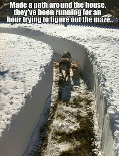 The house is the Glade, the snow is the Maze! ~ I would do this (if we got enough snow in Va that is!)