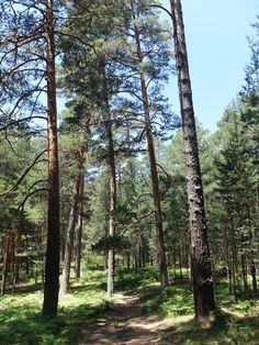 Ruta Cotos- La Granja a la altura de los Montes de Valsain