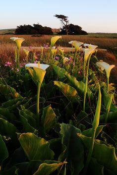 Bodega Bay - California - USA (von Don McCullough)