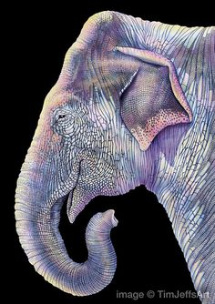 Asian Elephant Colored Pencil Drawing