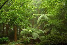 Parque Sete Fontes,  Sao Jorge
