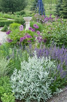 Garden with purple flowers and silver foliage – Yvonne's Country Garden