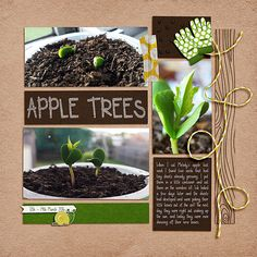 Monday's Highlight: Apple Trees by Christie 2016 Spring Challenge Template Bugging Out by Kristin Aagard Font: DJB See Spot Run & DJB This Is Me