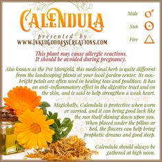 This versatile herb has been used for centuries in healing teas, for soup and stew flavoring, and as food and fabric dye. Calendula oil is still used extensively today to treat a wide range of conditions. // #herbalmagick #healing #protection #luck #magick #herbs #calendula #medicinal #sun #fire Wiccan Spell Book, Wiccan Spells, Witchcraft, Healing Herbs, Medicinal Herbs, Spiritual Beliefs, Spirituality, Herbal Kitchen, Magic Herbs