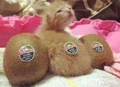 Kiwi Katze