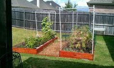 2012 garden, planning to double in size next year