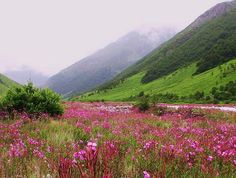 Valley of Flowers trek in the Garhwal Himalayas of Uttarakhand,India-now I know where to go with my love!