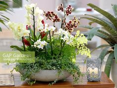 Indoor Gardens For Your Home Orchid Flower Arrangements, Orchid Planters, Orchid Pot, House Plants Decor, Plant Decor, Indoor Gardening Supplies, Tropical Centerpieces, Pot Plante, Ficus Pumila