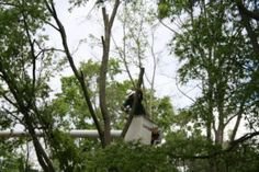 What Are the Practical Concerns and Benefits of Tree Removal and Tree Trimming Services?