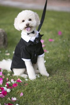Help your best friend put his best paw forward on the big day. Martha Stewart Pets® Tuxedo - PetSmart $15.99