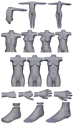 Building Human Anatomy in Maya: