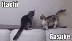 Naruto | Itachi | Sasuke | Cute | Cats