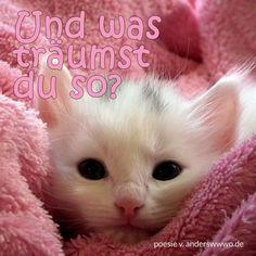 Und was träumst du so? #Katzen #süß #cute