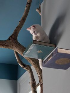 Cat wall perches made from wood bases and old books. - Romeow Cat Bistro